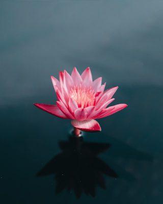 meditation and cbd