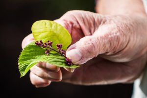 CBD for Parkinson's disease