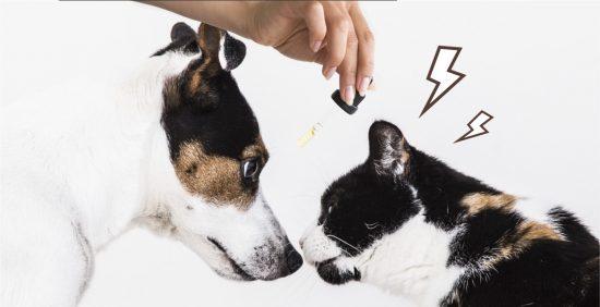cbd aggression cat dog