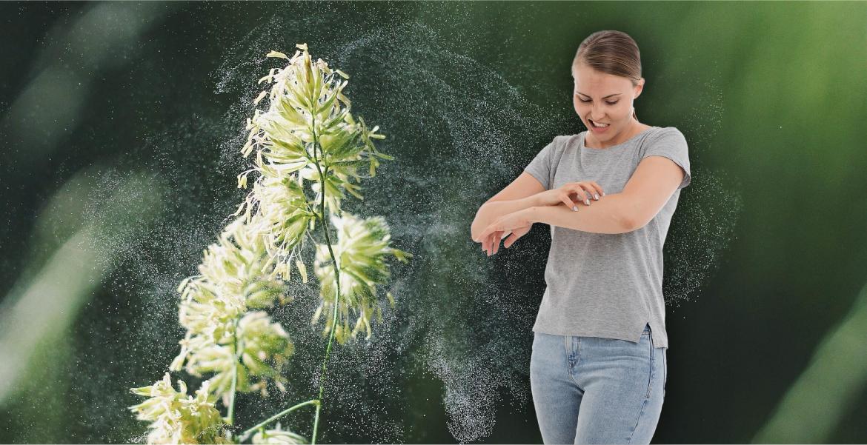 cbd oil allergies